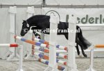 210215242 Jowout's Blacky (Haywards Guardsman x Heuvingshof Wout)-003.JPG